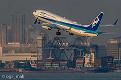 MAK-4136 (oga_mak) Tags: makogawauchi ogamak 東京都 日本 500mm eos eos1dxmarkii canon myeosphoto airport aircraft airplane aviation boeing b738 boeing737800 boeing737 airways allnipponairways hanedaairport hikoukiclub everybodyphoto キヤノン 羽田空港 飛行機撮り隊 飛行機大好き 飛行機写真 飛行機のある風景 飛行機倶楽部 飛行機 写真好きな人と繋がりたい カメラ好きな人と繋がりたい エビフォト mytokyois