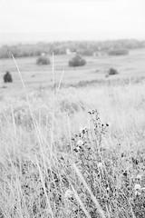 20190901_hp5_f5_03 (onebellboy) Tags: onebellboy wholerollproject wwwellsworthbellcom pentax me 50mm f17 ilford hp5 diafine kodafix nikonsupercoolscan4000 nosehill park calgary alberta monochrome outdoors landscape rain drizzle grey