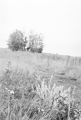 20190901_hp5_f5_13 (onebellboy) Tags: onebellboy wholerollproject wwwellsworthbellcom pentax me 50mm f17 ilford hp5 diafine kodafix nikonsupercoolscan4000 nosehill park calgary alberta monochrome outdoors landscape rain drizzle grey