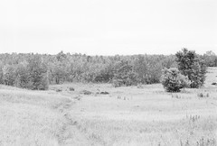 20190901_hp5_f5_16 (onebellboy) Tags: onebellboy wholerollproject wwwellsworthbellcom pentax me 50mm f17 ilford hp5 diafine kodafix nikonsupercoolscan4000 nosehill park calgary alberta monochrome outdoors landscape rain drizzle grey