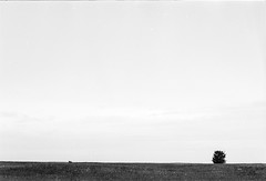 20190901_hp5_f5_25 (onebellboy) Tags: onebellboy wholerollproject wwwellsworthbellcom pentax me 50mm f17 ilford hp5 diafine kodafix nikonsupercoolscan4000 nosehill park calgary alberta monochrome outdoors landscape rain drizzle grey