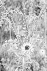 20190901_hp5_f5_08 (onebellboy) Tags: onebellboy wholerollproject wwwellsworthbellcom pentax me 50mm f17 ilford hp5 diafine kodafix nikonsupercoolscan4000 nosehill park calgary alberta monochrome outdoors landscape rain drizzle grey