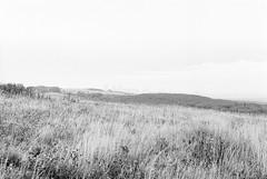 20190901_hp5_f5_09 (onebellboy) Tags: onebellboy wholerollproject wwwellsworthbellcom pentax me 50mm f17 ilford hp5 diafine kodafix nikonsupercoolscan4000 nosehill park calgary alberta monochrome outdoors landscape rain drizzle grey