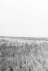 20190901_hp5_f5_24 (onebellboy) Tags: onebellboy wholerollproject wwwellsworthbellcom pentax me 50mm f17 ilford hp5 diafine kodafix nikonsupercoolscan4000 nosehill park calgary alberta monochrome outdoors landscape rain drizzle grey