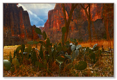Prickly Pear (Karen McQuilkin) Tags: pricklypearcactus zion nationalpark utah