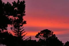 Morning Glow (ivlys) Tags: dänemark denmark hennestrand morgenröte morningglow landschaft landscape natur nature ivlys