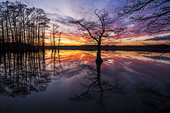 Reelfoot Lake (lightonthewater) Tags: reelfootlaketn reflection lake lightonthewater sunset trees tennessee cloudy clouds
