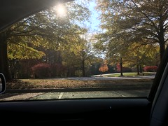 IMG_2093 November 6, 2017 (tombrewster6154) Tags: early november 2017 mmxvii triad park colfax north carolina smartphone camera picture monday daytime photography photograph fall foliage autumnal glory midautumn southern united states usa tar heel state parking lot sunshine white dividing lines daylight lovely scenery nature