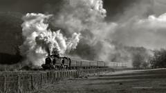 HANGING STEAM (EBOR/67) Tags: uk gwr gwrpanniertank photocharter blackandwhite bnw heritagerailways churnetvalleyrailway preservedsteamlocomotive railwaypreservation greatwesternsteamlocomotives