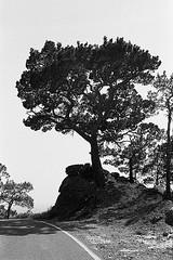 f80_119_5 (Ghostwriter D.) Tags: kreta crete 2018 nikonf80 blackandwhite blackwhite analog film greece tree