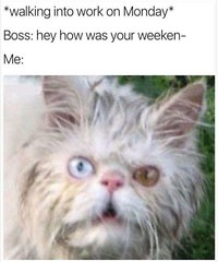 How was your weekend (gagbee18) Tags: animals aww boss catmemes cats funny memes weekend