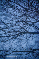 Web of Branches (Photographybyjw) Tags: web branches heavy morning fog frames this bare tree shot north carolina ©photographybyjw rural country trees foggy blue