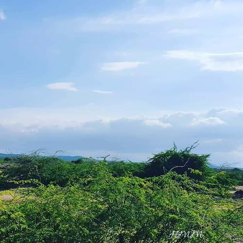 Sur la route de Damerjog Rien de mieux que de s'évader vers le sud de notre pays pour se retrouver dans un paysage de rêve ou certains profite de l'espace 😊😊 !!! . . . #travelphotograhy #travel #Djibouti #Weekend #Eastafrica #Africa #Djibstyle