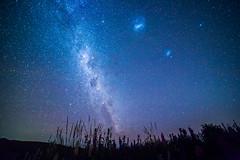 Milky Way above Lupin Field (Kelvinn Poon) Tags: newzealand 紐西蘭 southisland 南島 tekapo 特卡波 蒂卡波 milkyway stars astro longexposure night photography laketekapo 特卡波湖 蒂卡波湖 astrophotography nature lupinfield lupin 羽扇豆 魯冰花