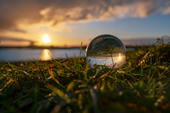 Sphere sunset (mike | MKvip.photo) Tags: sony⍺7rmarkii sony⍺7rii sonyilce7rm2 sonyalpha7rm2 sonyalpha sony alpha emount ⍺7iii ilce7rm2 ibis sigmafe24mmƒ14dghsm|a sigma art 24mmƒ14 closeup macro makro availablelight naturallight backlight backlighting sunset sunsetlight goldenhour shallowdof bokeh bokehlicious beyondbokeh extremebokeh smoothbokeh dreamy soft zen nature orange yellow water lake pond reflections sphere crystalball glasball winter rhine rhein altrhein neupotz germany europe mth mkvip sigmafe24mmƒ14dghsm|art