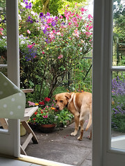Photo of Milo in the garden