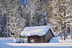 Winter Postcard (bayernphoto) Tags: winter schnee lenggries brauneck wald kalt cold snow tiefschnee bayern oberbayern bavaria hütte hut sonne sun forest baum bäume tree cross country ski skiing langlauf schneemassen