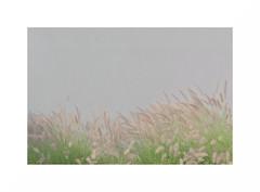 Brisa (juan jose aparicio) Tags: wall muro verde hierba grass minimal minimalista flor flowers