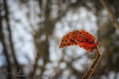 Winter flower 🌸 (corineouellet) Tags: canonphoto macro branches branch arbres tree trees canada details hdr fleurs fleur flower flowers depthoffield bokeh nature