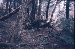 (✞bens▲n) Tags: pentax lx boots 200 carl zeiss 35mm f24 flektogon film expired slide ananogue nature trees woods stump nagano japan forest