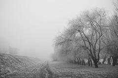 Negdje daleko... (frkasb) Tags: splavarskaulica splavarska vrbe snijeg mraz magla nasip hladno zima