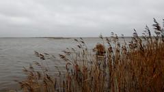 Filsø (ivlys) Tags: dänemark denmark filsø see lake vögel birds landschaft landscape natur nature ivlys