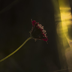 (Celeste Saez) Tags: flor flower colors color moody mood lightandshadows light naturaleza natura nature