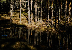 In the woods (Jose Rahona) Tags: bosque forest woods arbol arboles trees water source light shadows reflejo reflections paisaje landscape