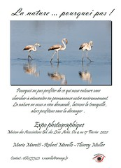 EXPO PHOTO ARLES 04 /17 FÉVRIER 2020 (thierrymuller) Tags: animal arles elpadrepicture photo photographie mamanano france frenchtouch french flamantrose nikonpassion nikon nature bird oiseaux aves lanaturepouquoipas exposition bio 3