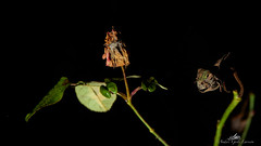 2020-01-30 18.08.32 - Death of the rose, Fri leg, Dag 30-366, Uge 5, Assentoft, Randers - _DSC7597 - ©Anders Gisle Larsson