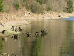am See (germancute ***) Tags: nature outdoor thuringia thüringen landscape landschaft