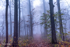 Whispering... (jaegemt1) Tags: landscape fog forest foggy trees tranquil fall fallcolors light outdoors mariajaegerphotography mist mountains jaegemt1 journey path peaceful parkway peace whisper blueridgeparkway virginia