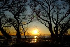 おはよう夕暮れ (atacamaki) Tags: xt2 23mm f14 xf fujifilm jpeg撮って出し atacamaki kasumigaura japan ibaraki tsuchiura 霞ヶ浦 sunset lake tree sun nature shadow 原付帰り道 夕日 夕方 abendröte coucherdusoleil tramonto puestadelsol закат 落日