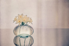 Signs of spring (Ro Cafe) Tags: stilllife simple littlebottle flowers narcissus daffodils backlight naturallight highkey reflections textured nikkor105mmf28 sonya7iii