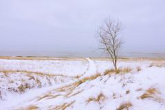 025593a  A Day With No Horizon (David G. Hoffman) Tags: lake lakeshore lakemichigan winter snow tree path beach beachgrass