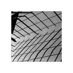contrast fence (Armin Fuchs) Tags: arminfuchs lavillelaplusdangereuse diagonal fence hff shadows square light niftyfifty