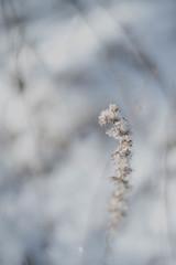 Frozen (Christoph Wenzel) Tags: pancolar1850mm deutschland manuell eis sonyalpha7riii neuhausamrennweg carlzeissjena frost natur vintage winter thüringen m42 landschaft