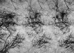 pinhole 1278 (detail) (kudaphoto) Tags: pinholephotography pinhole pinholecamera trees abstract multilenslessexposure analog analogphotography sténopé skylė silence stenoscopia portland oregon winter park lensless