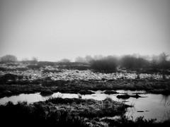 Hohes Venn / Eifel (PHOTOGRAPHY Toporowski) Tags: eifel moor cold landscape landschaft kalt schnee eifelliebe hohesvenn winter belgien begium mützeneich monschau nature outside bw blackandwhite