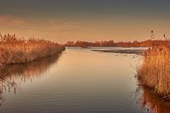 Evening mood in the reeds (Flowerikka B) Tags: abends abendsonne abendstimmung atmosphäre birds dämmerung eveningmood eveningsun habitat lebensraum naturschutzgebiet reed reflection rieselfelder schilf schutzgebiet sky sonnenuntergang vögel vogelschutzgebiet wasser wasserspiegelungen water