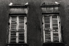 (sharmi_diya06) Tags: street streetphotography streetphot abstract birds blackandwhite animal letsexplore outside natgeoyourshot natgeophotographers natgeophotographer yourshotnatgeo light
