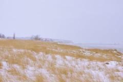 025591a  Water Colors Day (David G. Hoffman) Tags: lake lakeshore lakemichigan beach beachgrass vanishingpoint winter snow