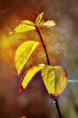 Souvenir d'automne (mamietherese1) Tags: coth coth5 earthmarvels50earthfaves world100f legacy