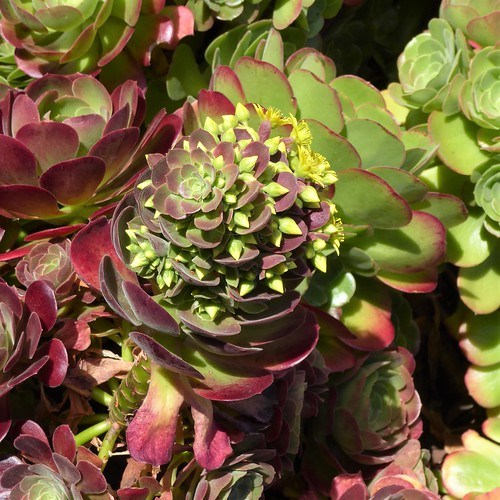 San Francisco, CA, Noe Valley, Succulent Plants