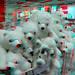 IKEA Barendrecht Knuffels 3D GoPro