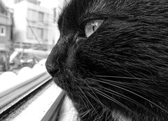 Timmy supervising the neighbourhood (wolfgang.kynast) Tags: timmy happycaturday profile