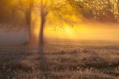 Foggy October Morning/ Mglisty październikowy poranek (Grefer) Tags: poland polska sunrise fog foggy mist misty october mgła nikond300s