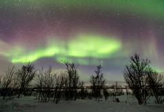 Aurora Borealis in Norway (christianschmaler) Tags: auroraborealis northernlights nordlicht green grün stars sterne night nacht nightsky nachthimmel langzeitbelichtung longexposure birken trees baum bäume schnee snow winter eis ice norwegen norway