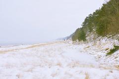025589a  When I'm Totally Alone, I Feel Totally Free! (David G. Hoffman) Tags: lake lakeshore lakemichigan winter snow dunes vanishingpoint beach beachgrass