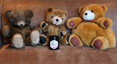 honey bear meeting (HansHolt) Tags: bear bears three teddy honey jar plushedtoy stuffedtoy cuddlytoy knuffel tabletop canoneos6d canonef24105mmf4lisusm smileonsaturday bonniebears